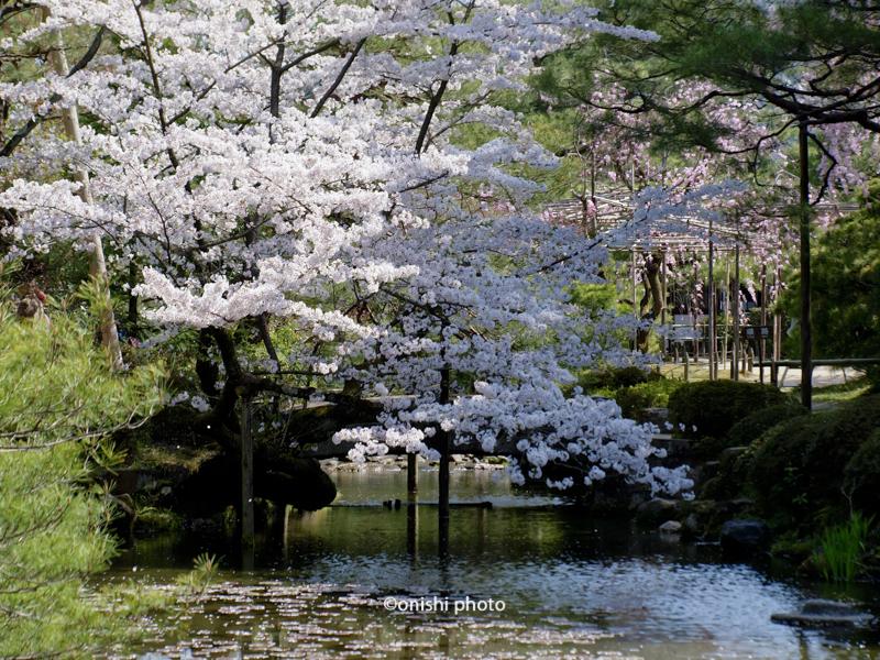 京都観光 名所